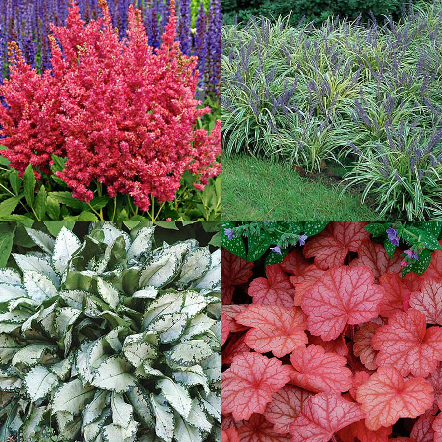 top 28 shade only plants shade loving plants for