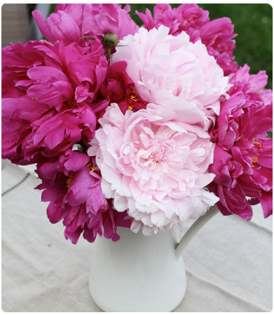 heirloom peonies