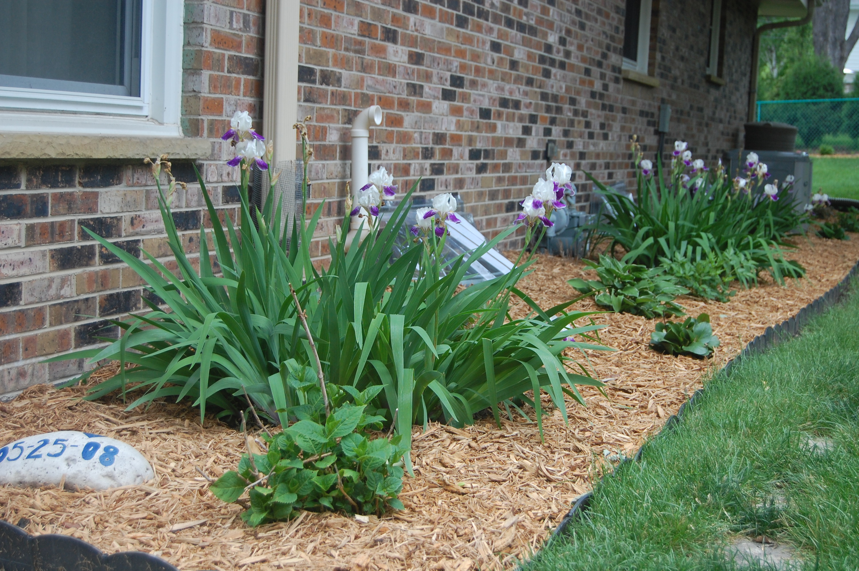 Landscaping Bushes For Wisconsin : In the season and next year when our small plants blossom bloom